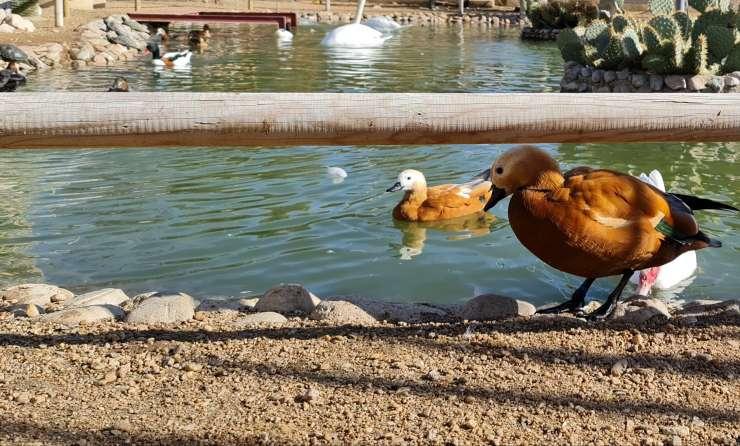 lago, patos, aves, parque la era de las aves, zoo valladolid